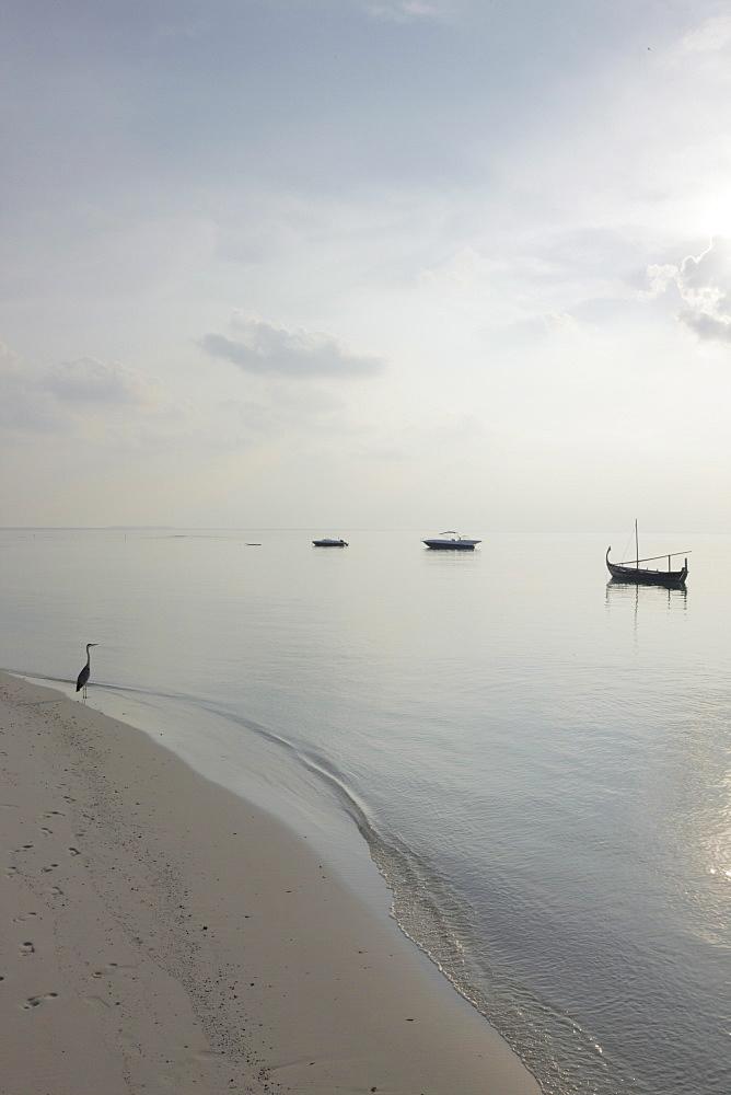 Beach, Maldives, Indian Ocean, Asia