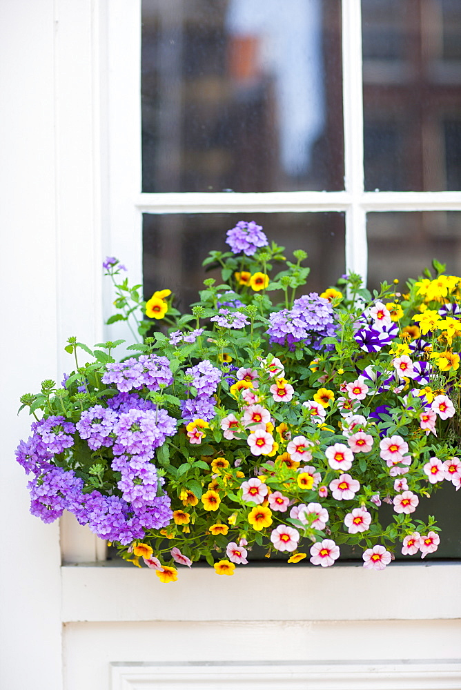 Window box, Amsterdam, The Netherlands, Europe