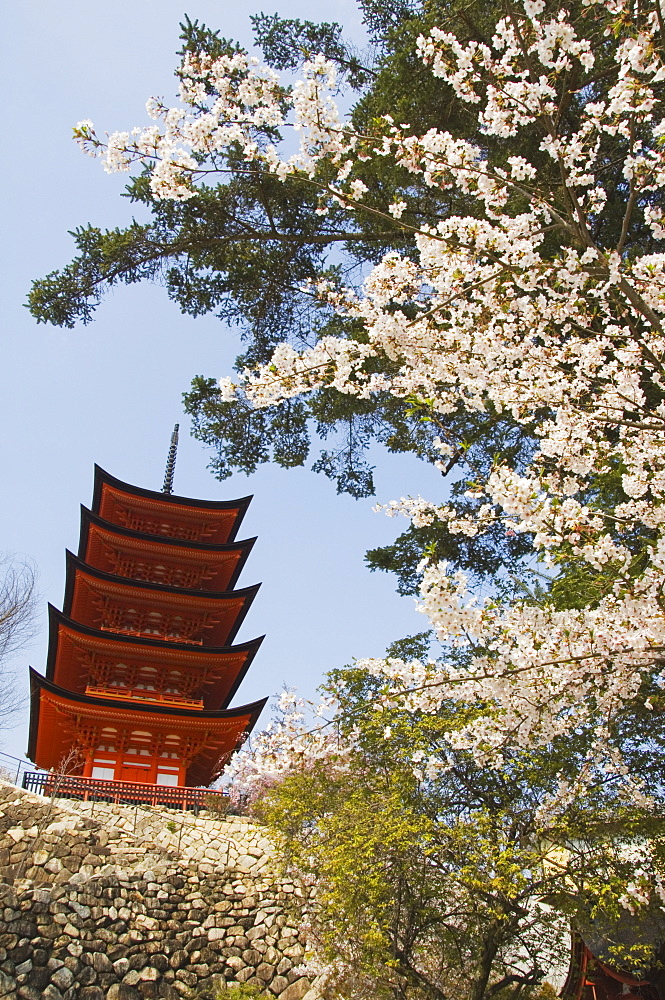 Spring cherry blossom at Senjokaku five storey pagoda, Miyajima island, UNESCO World Heritage Site, Honshu Island, Japan, Asia