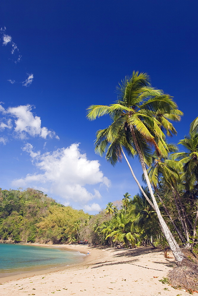 Palm tree fringed beach, Englishmans Bay, Tobago, Trinidad and Tobago, West Indies, Caribbean, Central America