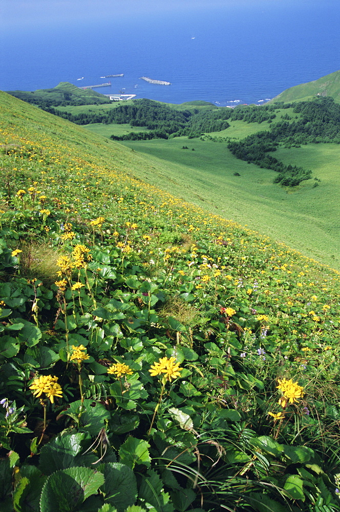 Rebun Island coastline and mountain flowers, Hokkaido, Japan