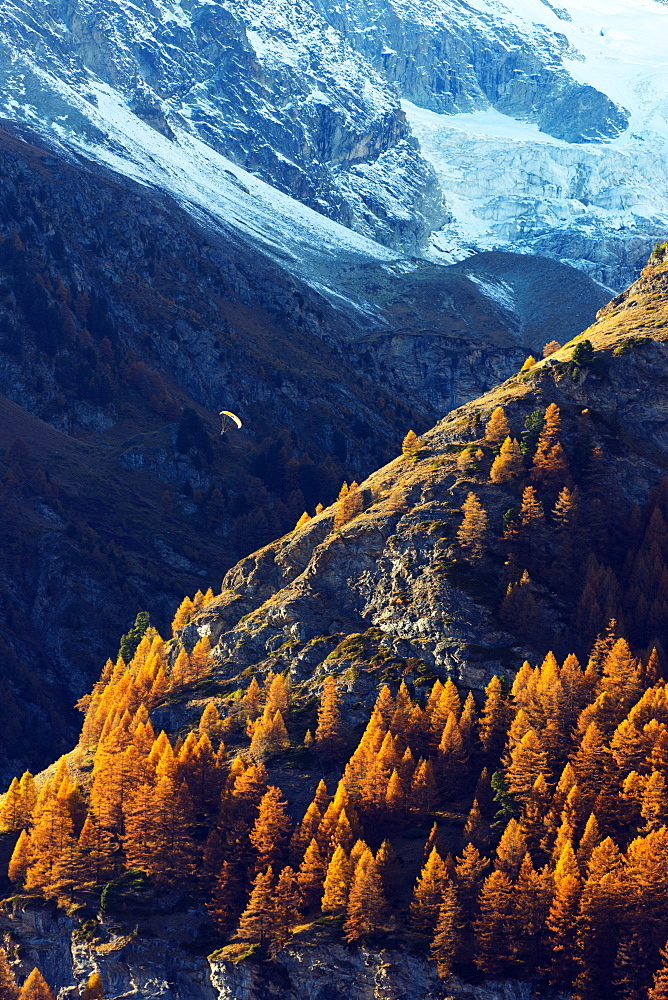 A paraglider flying in autumn, Zermatt, Valais, Swiss Alps, Switzerland, Europe