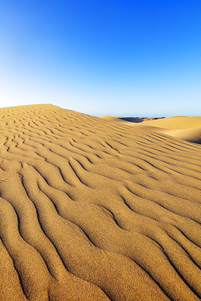 Europe, Spain, Canary Islands, Gran Canaria, Nature Reserve Dunes of Maspalomas - 733-8455