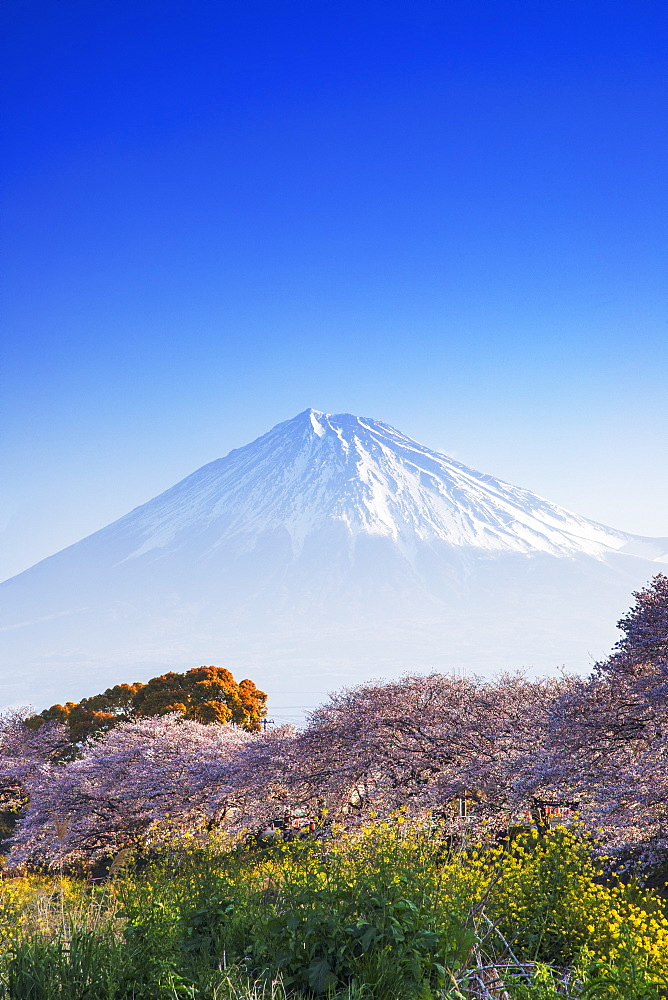 Mount Fuji, 3776m, UNESCO World Heritage Site, Yamanashi Prefecture, Honshu, Japan, Asia