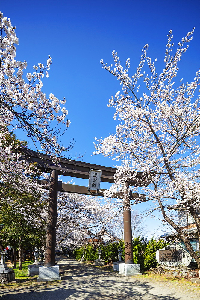 Asia, Japan, Honshu, Yamanashi prefecture, cherry blossom and a torii gate