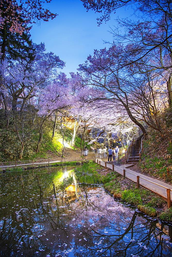 Cherry blossom at Takato castle, Takato, Nagano Prefecture, Honshu, Japan, Asia
