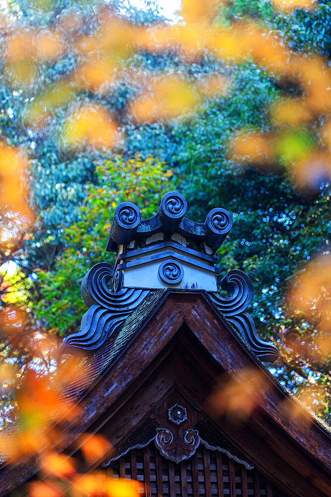 Autumn leaves and temple building, Kyoto, Kansai, Japan, Asia