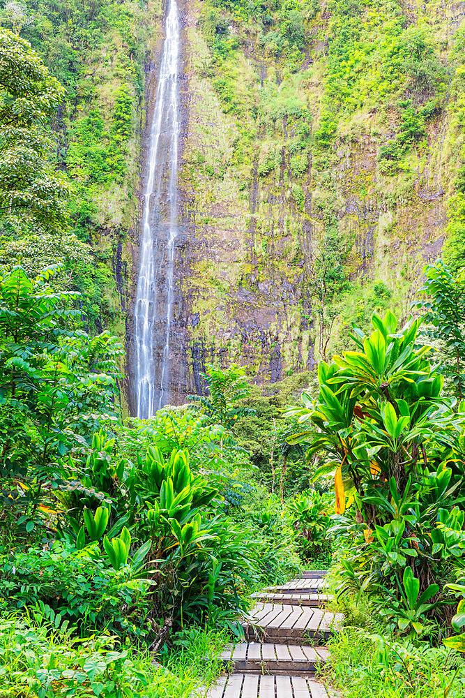 United States of America, Hawaii, Maui island, Haleakala National Park, Pipiwai trail, Waimoku falls - 733-9045