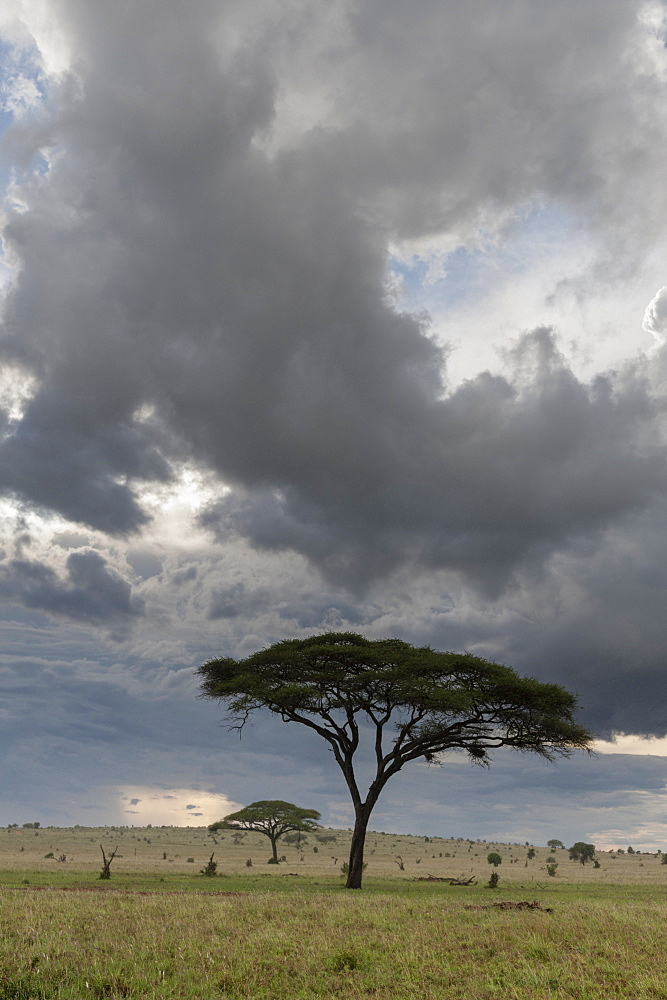 A cloudy sky over the plains of Tsavo, Kenya, East Africa, Africa