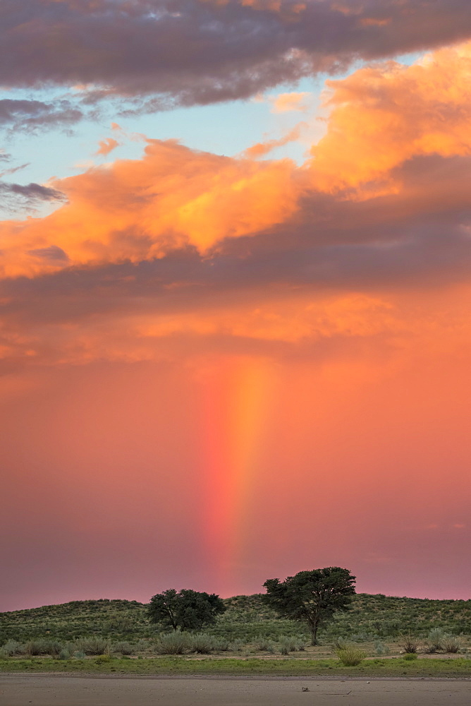 Sunset and storm over Kgalagadi Transfrontier Park, Northern Cape, South Africa, Africa - 743-1528