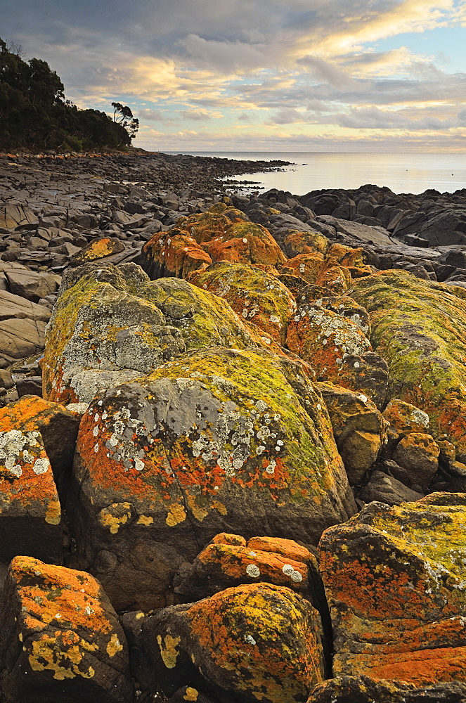 Lichen covered rocks, Shore at Greens Beach, Tasmania, Australia, Pacific