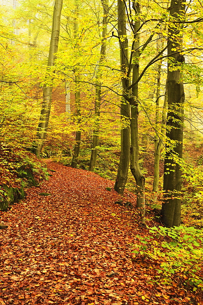 Autumn forest around Karlovy Vary, Czech Republic, Europe - 756-2777