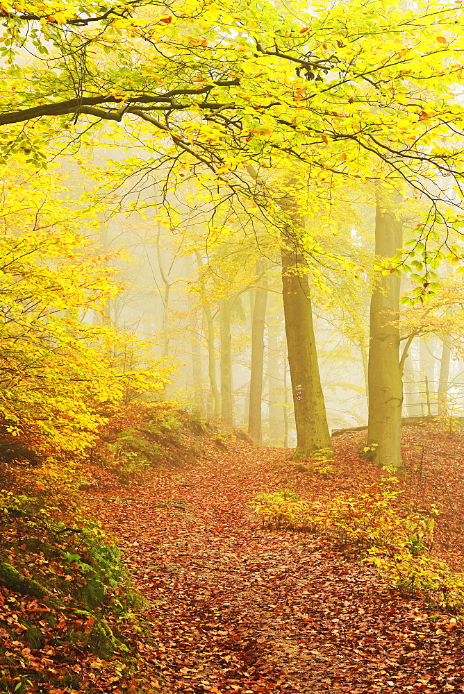 Autumn forest around Karlovy Vary, Czech Republic, Europe - 756-2780