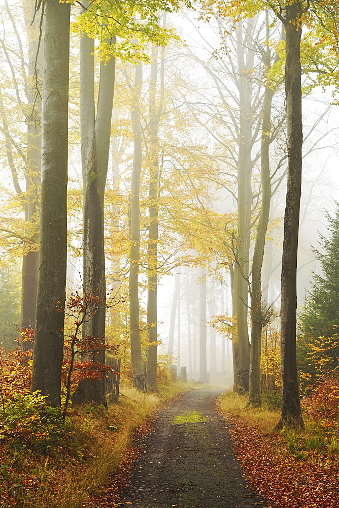 Autumn forest around Karlovy Vary, Czech Republic, Europe - 756-2783