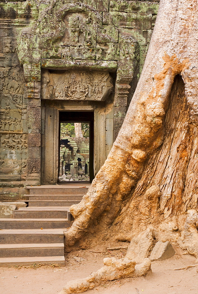 Ta Prohm temple, Angkor, UNESCO World Heritage Site, Siem Reap, Cambodia, Indochina, Southeast Asia, Asia - 756-792