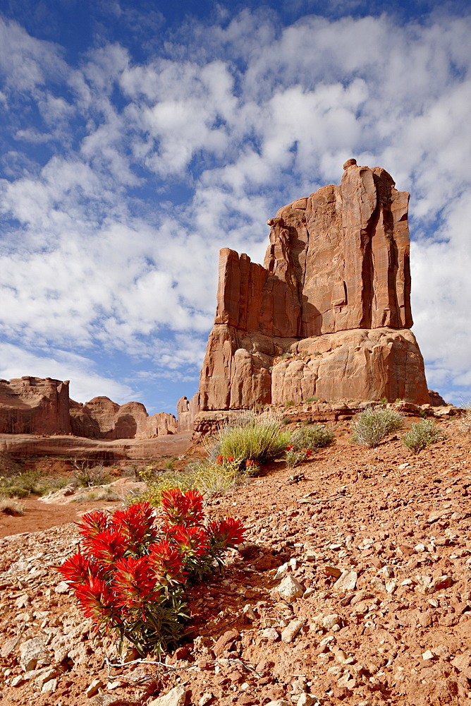 Rock formation and common paintbrush (Castilleja chromosa), Arches National Park, Utah, United States of America, North America