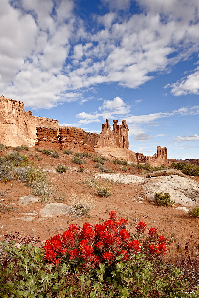 The Three Gossips and common paintbrush (Castilleja chromosa), Arches National Park, Utah, United States of America, North America