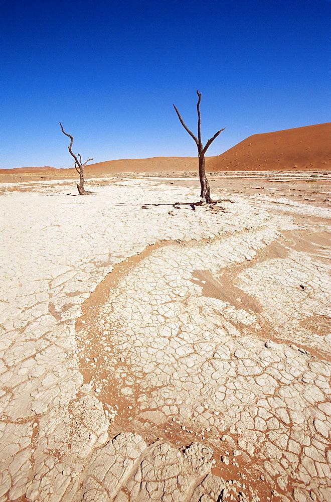 Deadvlei, Namib Naukluft Park, Namibia, Africa