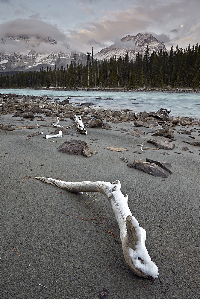 Snow-covered driftwood along the Athabasca River, Jasper National Park, UNESCO World Heritage Site, Alberta, Canada, North America