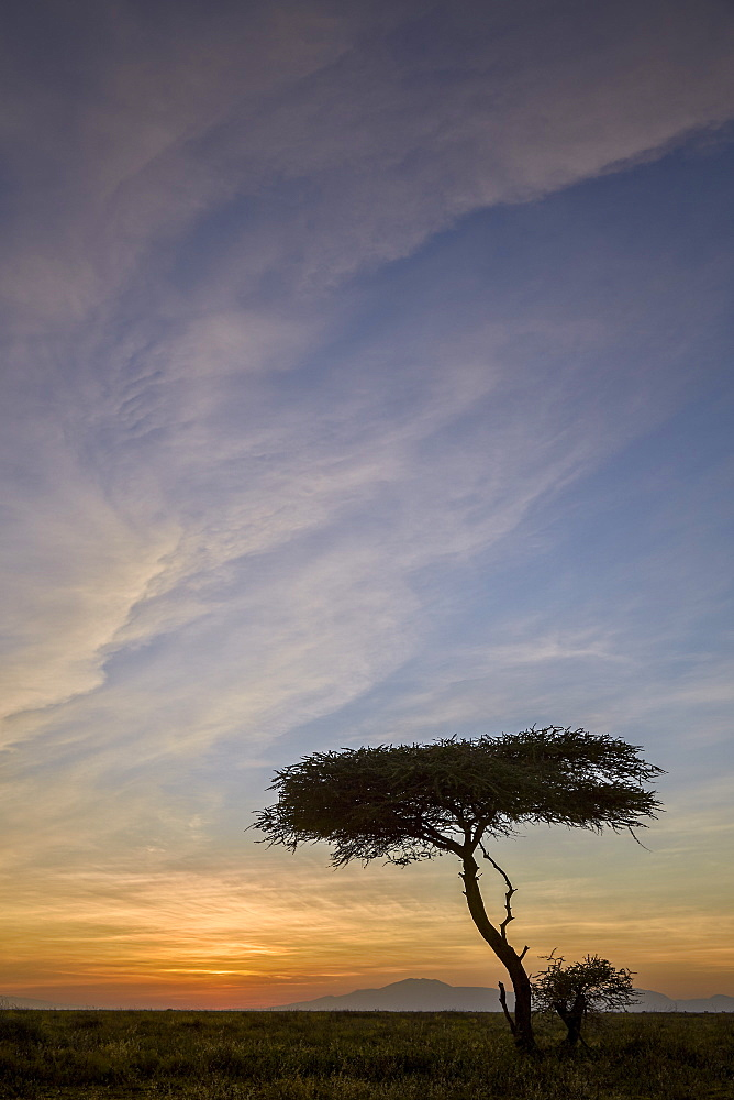 Acacia tree and clouds at sunrise, Ngorongoro Conservation Area, UNESCO World Heritage Site, Serengeti, Tanzania, East Africa, Africa