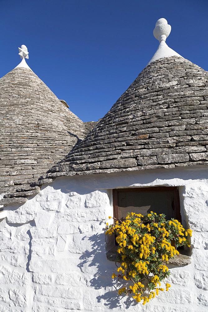 Traditional trullos (trulli) in Alberobello, UNESCO World Heritage Site, Puglia, Italy, Europe