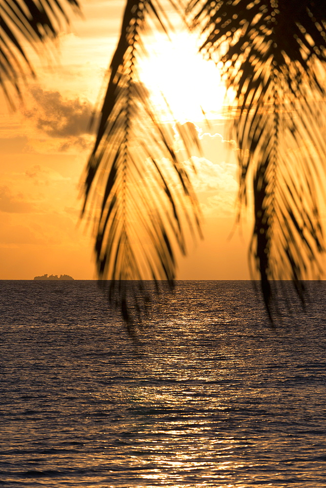 A tropical sunset through palm leaves on an island in the Maldives, Indian Ocean, Asia