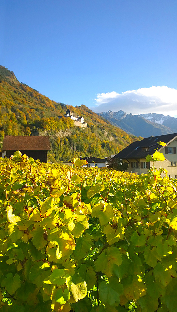 Vaduz Castle In Liechtenstein With Vineyards In Foreground