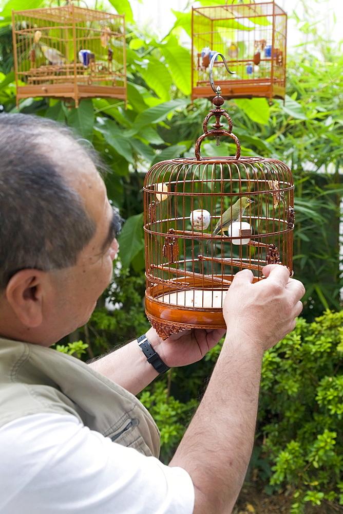 Yuen Po Bird market, Kowloon, Hong Kong, China, Asia