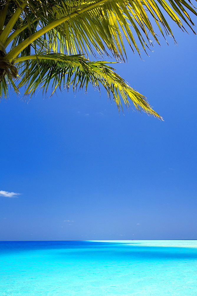 Shades of blue and palm tree, tropical beach, Maldives, Indian Ocean, Asia - 795-519