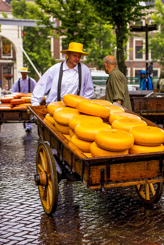 Transportting Gouda cheese wheels on cheese cart from Alkmaar cheese market to shops, Alkmaar, Holland, Netherlands. - 796-2552