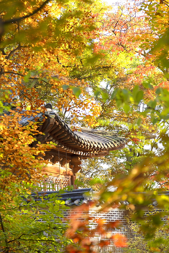 Secret Garden in Changdeokgung Palace, UNESCO World Heritage Site, Seoul, South Korea, Asia - 800-3877