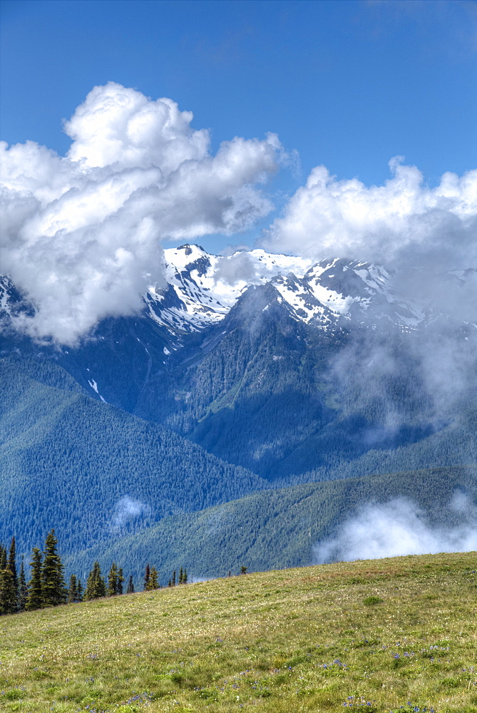 Hurricane Ridge, Olympic National Park, UNESCO World Heritage Site, Washington, United States of America, North America