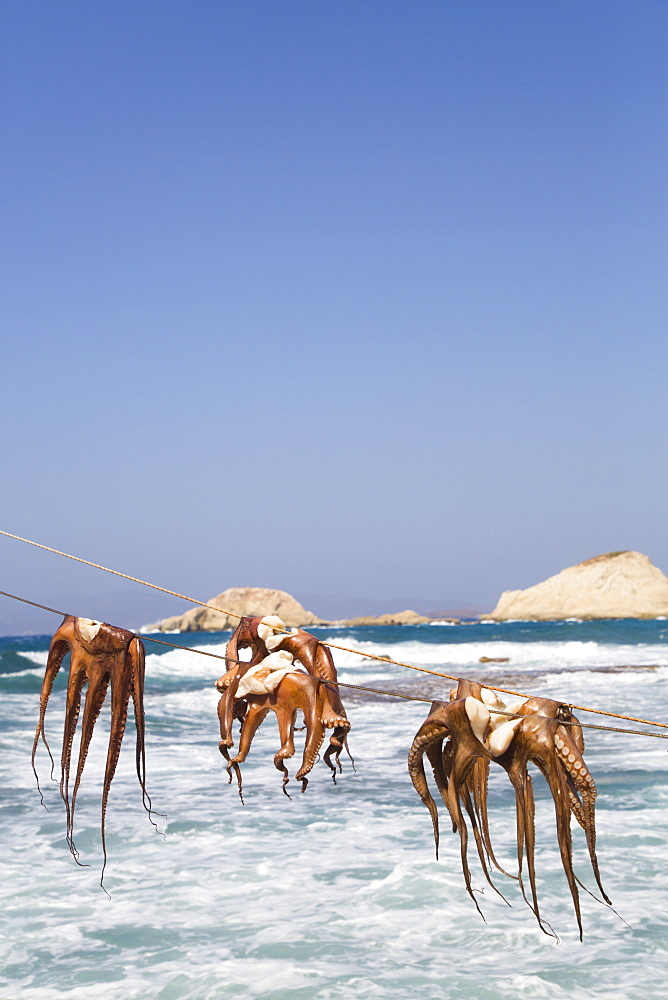Drying Octopus, Mandrakia Village, Milos Island, Cyclades Group, Greek Islands, Greece, Europe