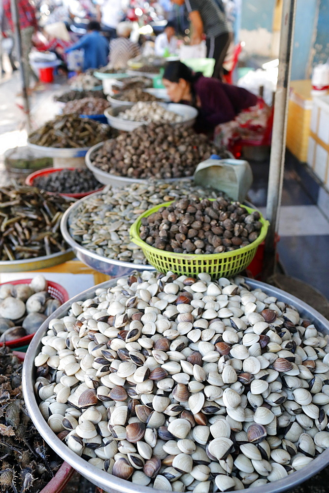 Fresh clams for sale in fish market, Ha Tien, Vietnam, Indochina, Southeast Asia, Asia