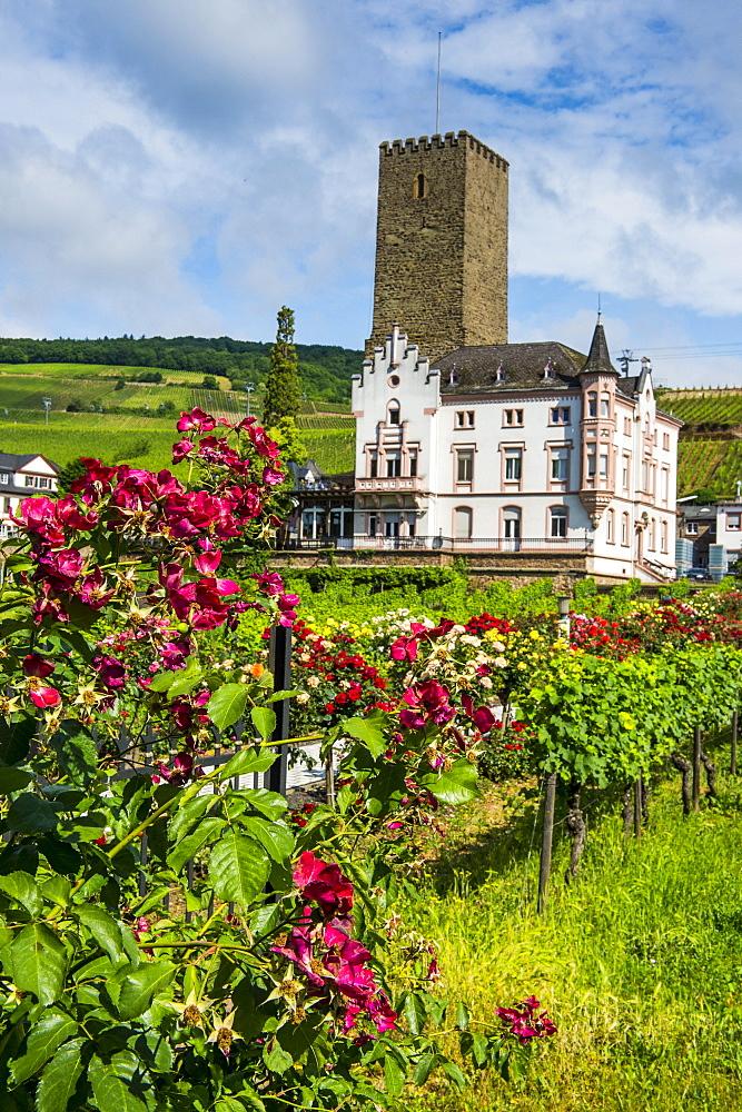 Vineyard in front of the Bruemserburg in Ruedesheim (Rudesheim) on the River Rhine, Rhine Gorge, UNESCO World Heritage Site, Hesse, Germany, Europe