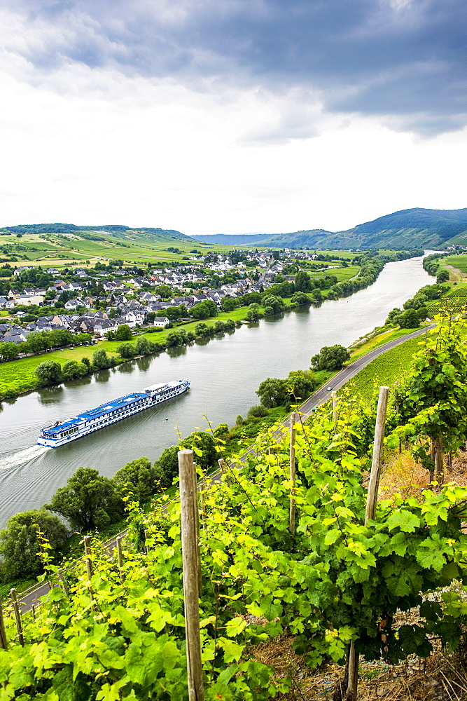 Cruise ship passing a vineyard at Muehlheim, Moselle Valley, Rhineland-Palatinate, Germany, Europe