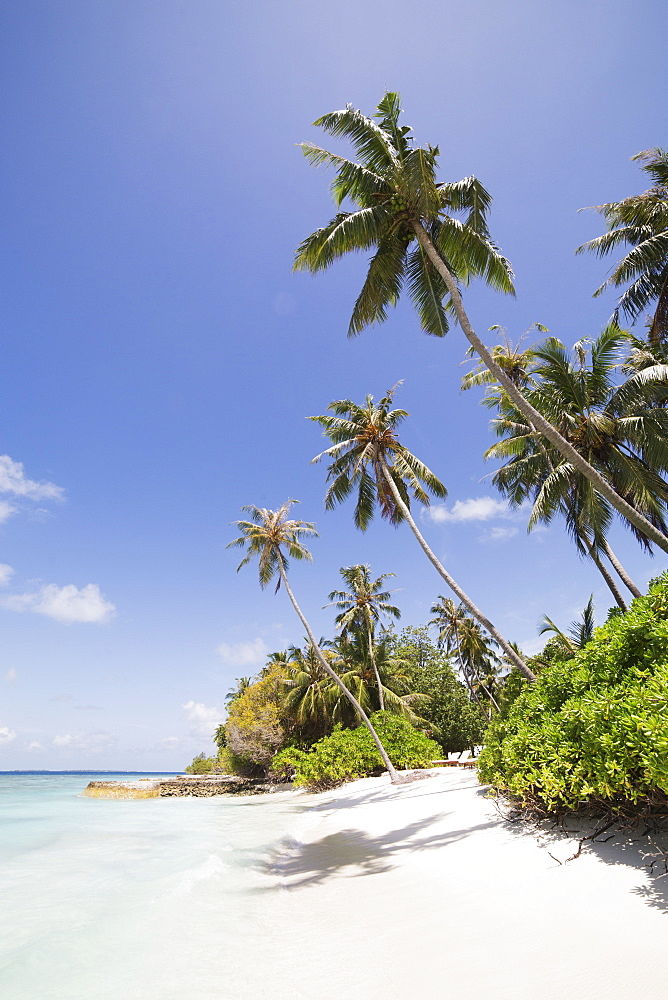 Palm trees lean over white sand, under a blue sky, on Bandos Island in The Maldives, Indian Ocean, Asia - 826-693