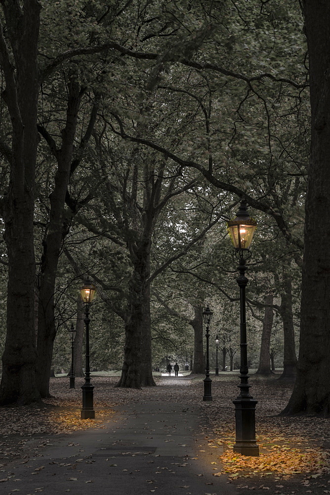 Green Park at dusk, Westminster, London, England, United Kingdom, Europe - 828-1116