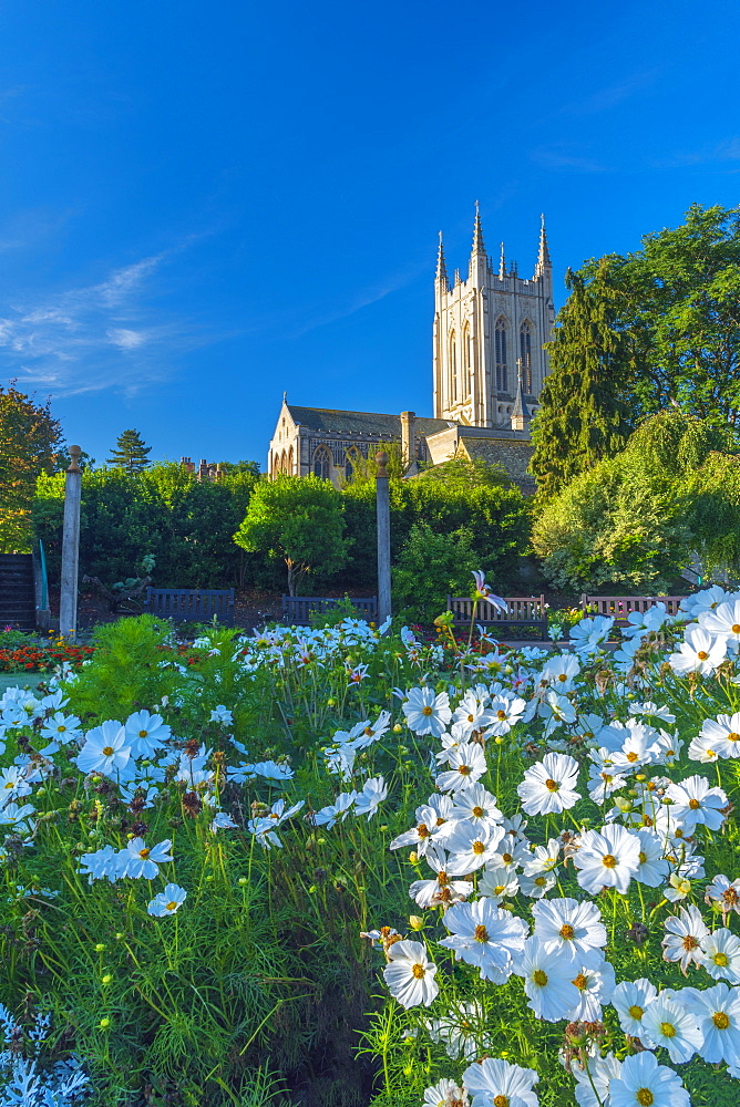 UK, England, Suffolk, Bury Saint Edmunds, St Edmundsbury Cathedral from the Abbey Gardens - 828-1268