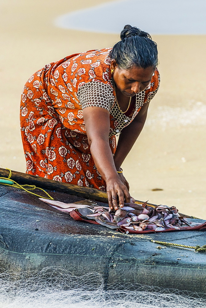 Woman sorting small fish on simple fishing raft at busy, popular Marari Beach; Mararikulam, Alappuzha (Alleppey), Kerala, India