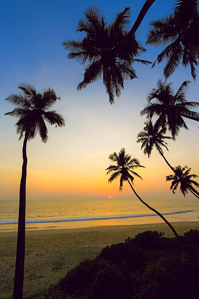 Leaning palm trees at sunset on lovely unspoilt Kizhunna Beach, south of Kannur on the state's North coast, Kannur, Kerala, India, Asia