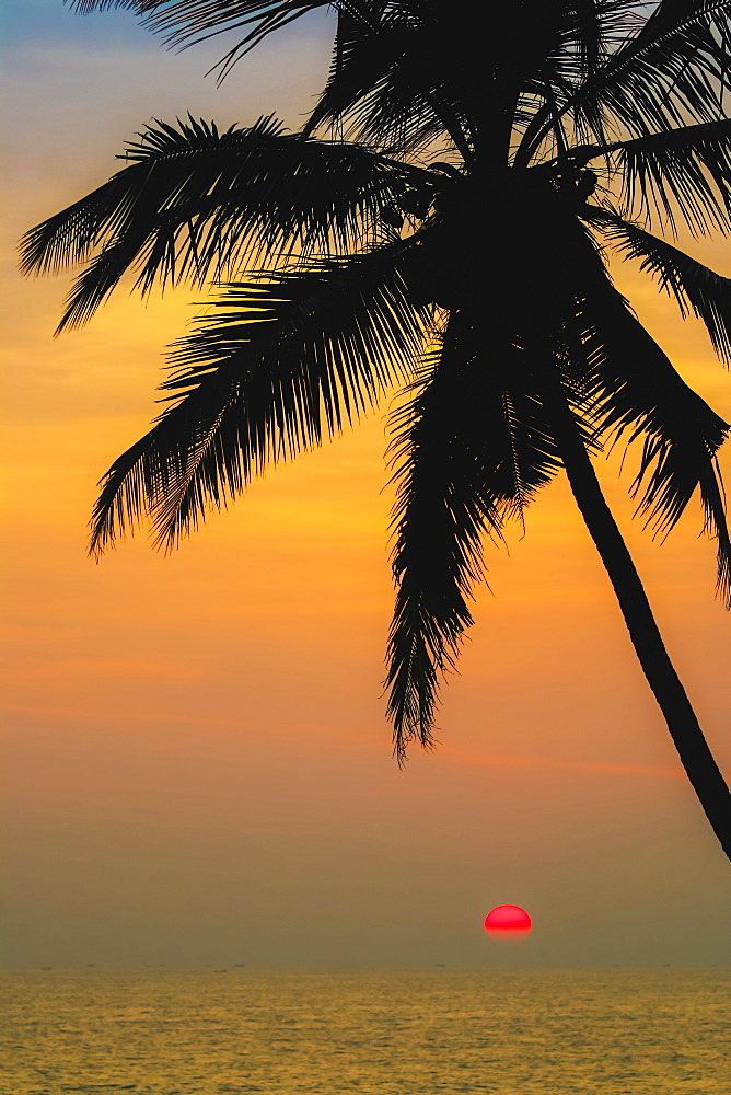 Leaning palm tree at sunset on lovely unspoilt Kizhunna Beach, south of Kannur on the state's North coast, Kannur, Kerala, India, Asia
