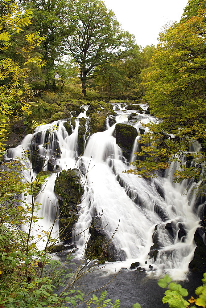 Swallow Falls in autumn, near Betwys-y-Coed, on River Llugwy, Conwy, Wales, United Kingdom, Europe - 831-1499