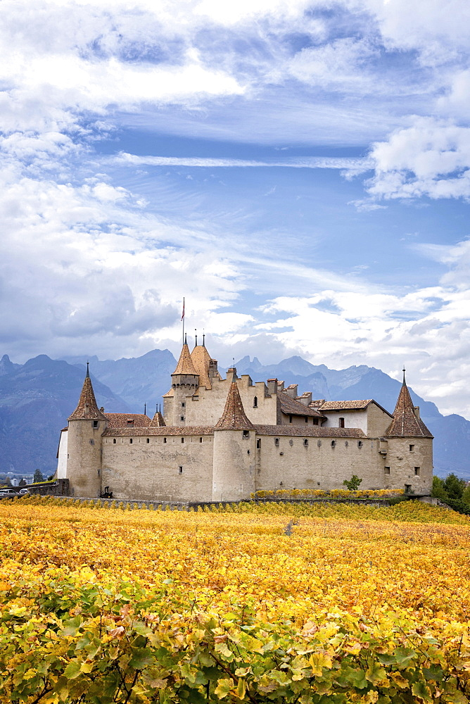 Aigle Castle surrounded by vineyards, Aigle, Vaud, Switzerland, Europe