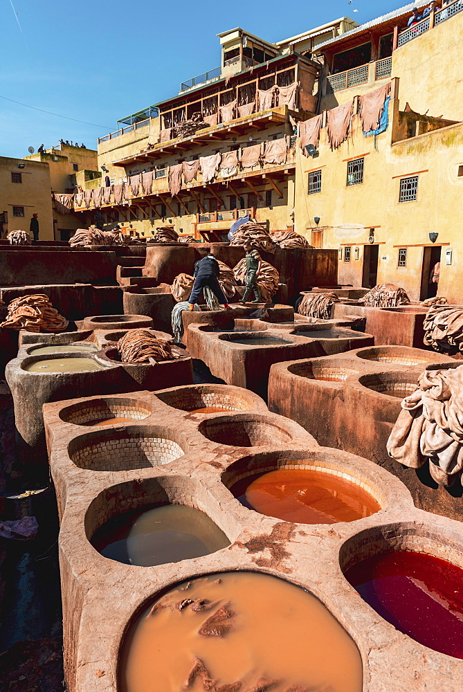 Worker dyeing leather, basin with paint, dyeing, tannery Tannerie Chouara, tanner and dyer quarter, Fes el Bali, Fes, Morocco, Africa