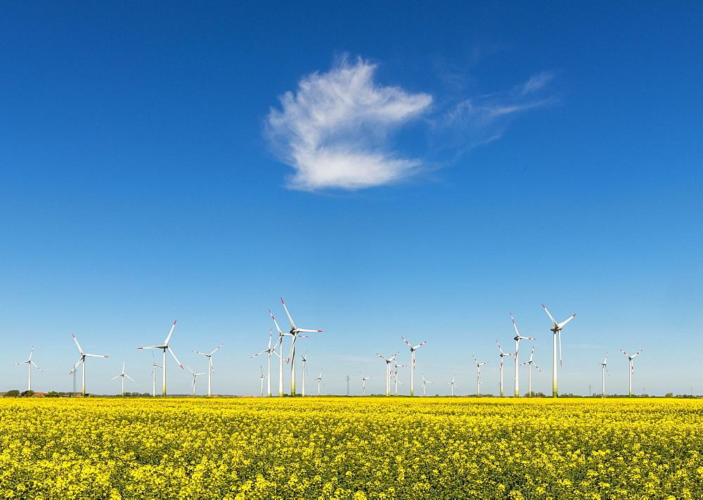 Wind turbines in rape fields in front of blue sky, Norderwoehrden, Schleswig-Holstein, Germany, Europe