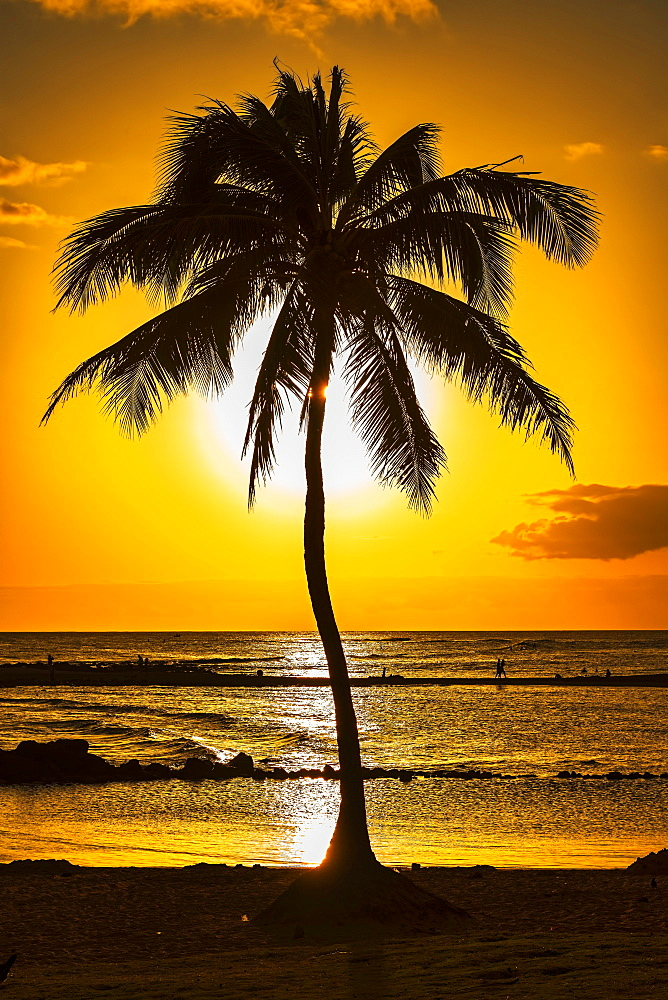 Palm tree at sunset, Kauai, Hawaii, United States, North America