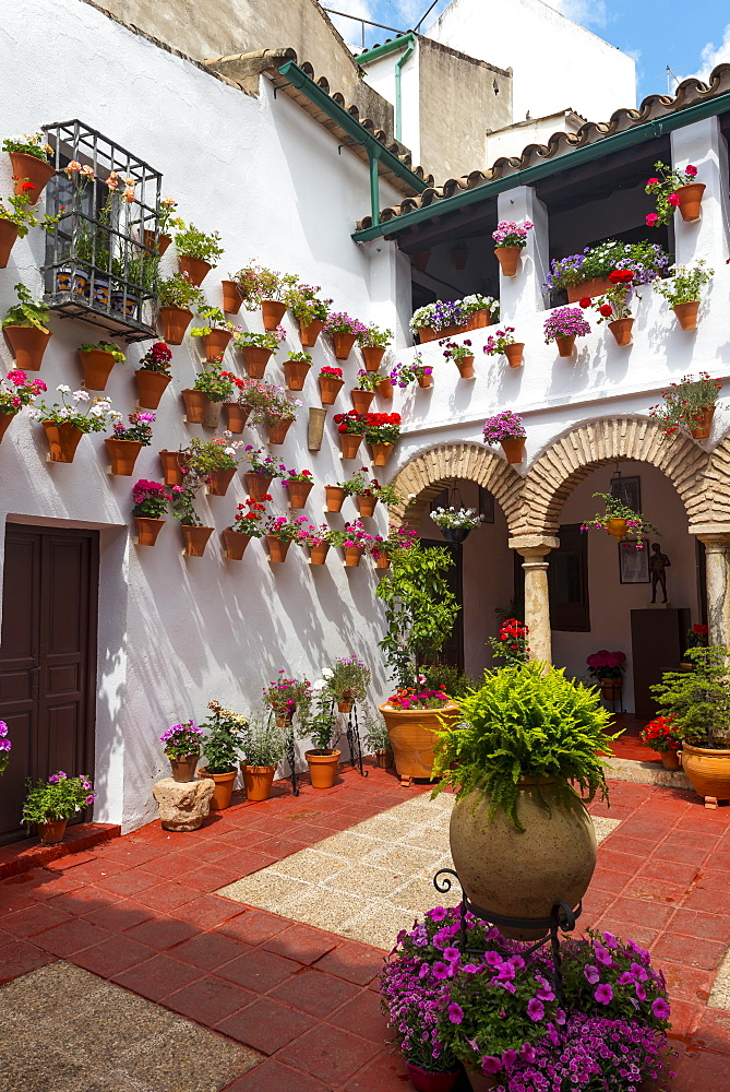 Many flowers in flowerpots in the courtyard on a house wall, Fiesta de los Patios, Cordoba, Andalusia, Spain, Europe