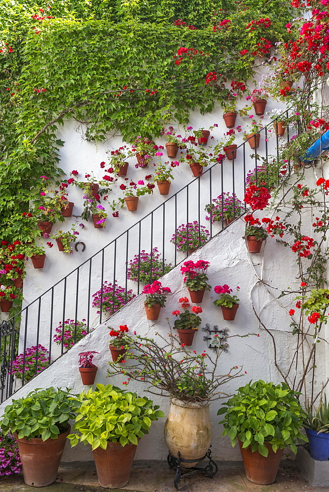 Many red flowers on a house wall, stairs, Fiesta de los Patios, Cordoba, Andalusia, Spain, Europe
