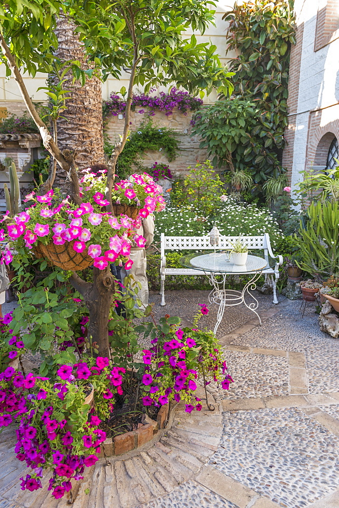 Flowers in a courtyard with a garden bench, Fiesta de los Patios, Cordoba, Andalusia, Spain, Europe